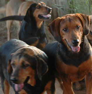 Huntin'dogs